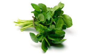 Watercress-001